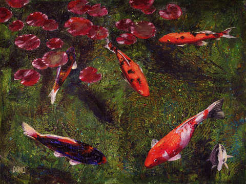 Koi-fish-swimming-at-volunteer-park