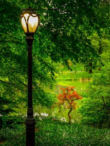 Evening falls in the park streetlamp series