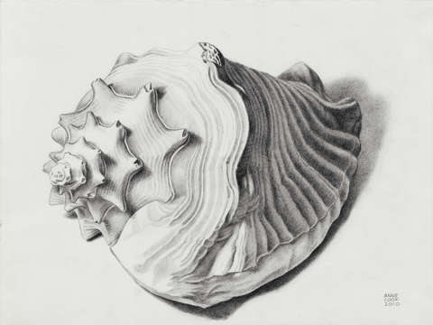 Conch Shell By Anne Cook Turningart