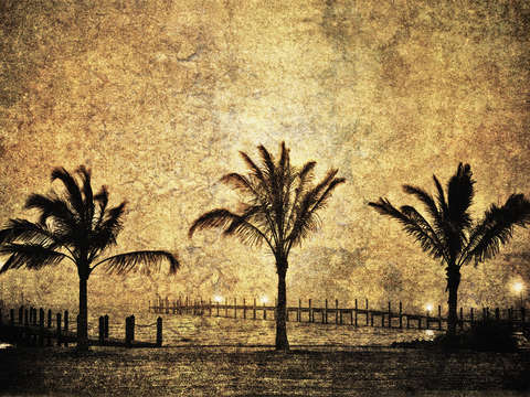Three Palms _1