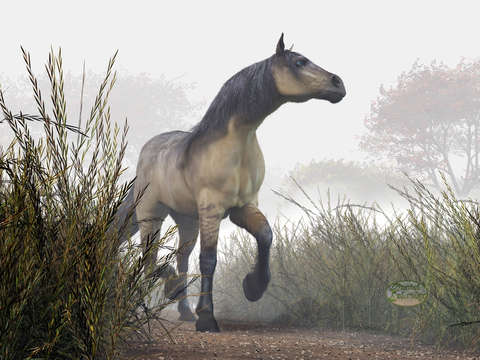 Pale Horse in the Mist