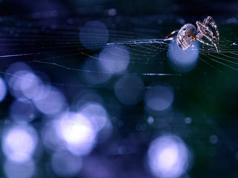 Spider and bokeh