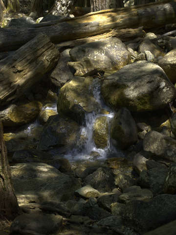 Bridal veil creek in dappled light
