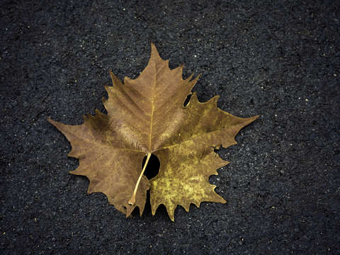 Leaf on Ground