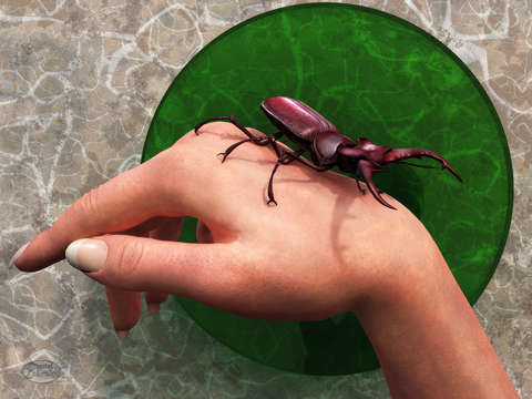 Stag beetle on hand
