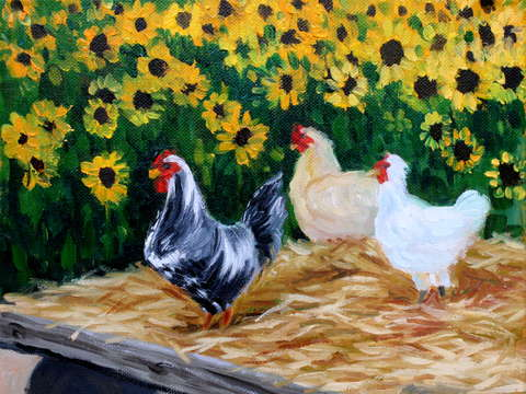 Chickens on the sunflower farm