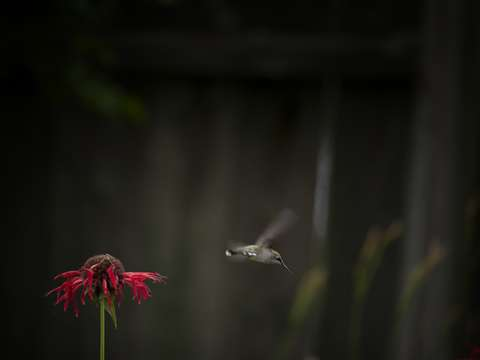 A moment in the life of a hummingbird
