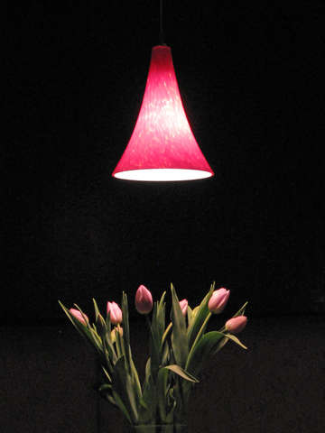 Lamplight on Tulips
