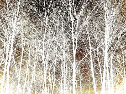 White tree forest 921