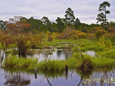 Circle in the Swamp