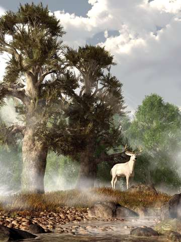 White stag on a misty morning