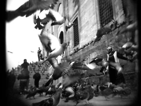 Flight of pigeons