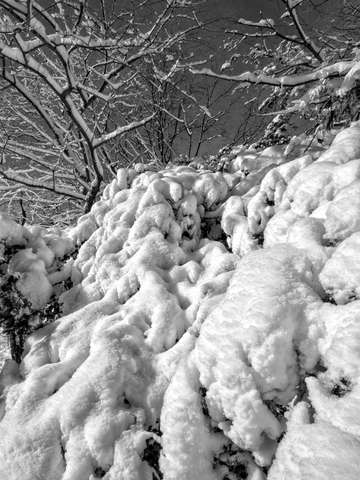 Snow and branches 1