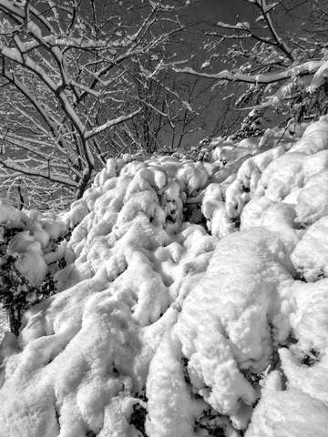 Snow and branches 1 2