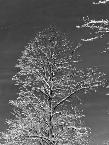 Winter tree 2