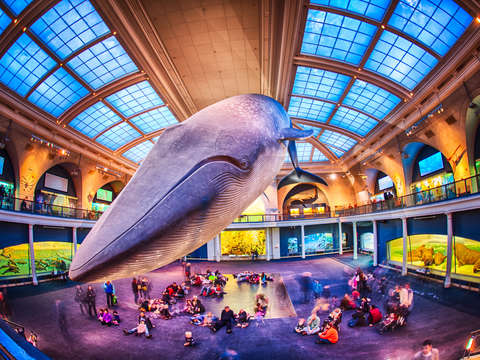 The blue whale american museum of natural history