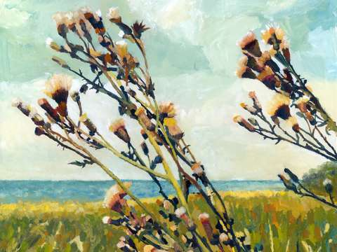Thistles on the beach