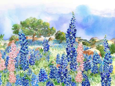 Texas bluebonnets 2