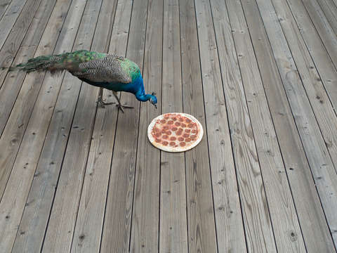 Pizza peacock