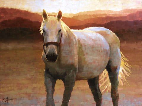 Grey horse at sunset