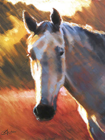 Grey horse at sunset ii