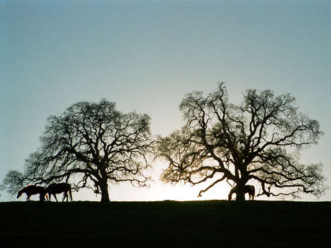 Horse and trees