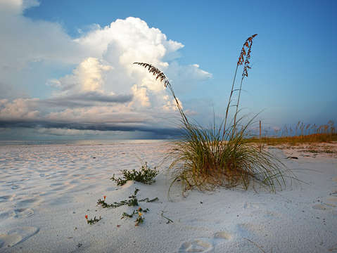 Seaoats waiting on the storm