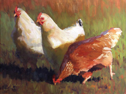 Chickens on stone meadow farm