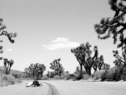 Untitled joshua tree