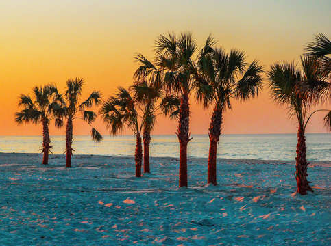 Palm Trees on Gulf State Beach