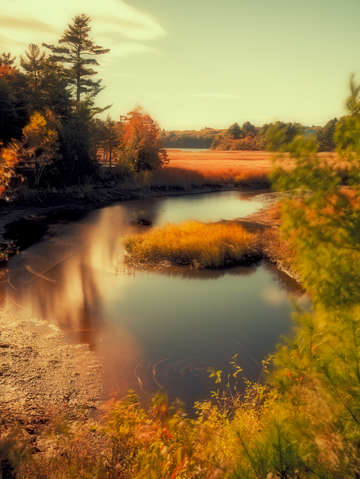 Autumn foliage pond coastal maine