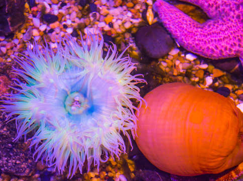 Anemone and friends