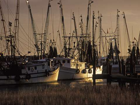 Shrimp trawlers