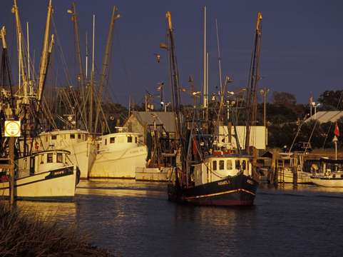 Trawlers at dock