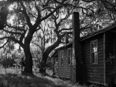 Old home and live oak tree