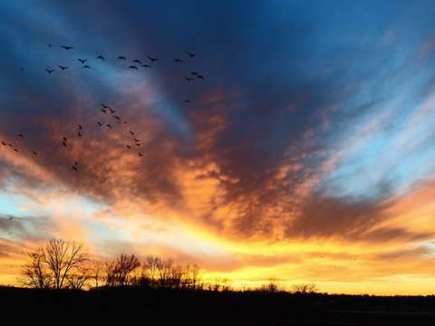 Winter sunset with geese