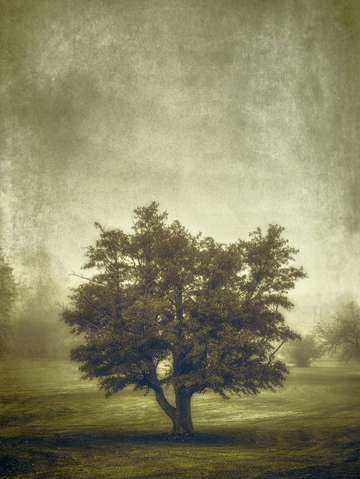 Tree in the fog 2