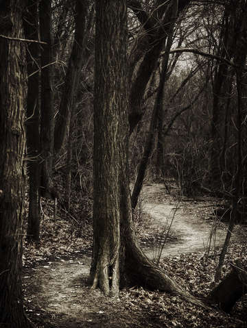 Dark winding path