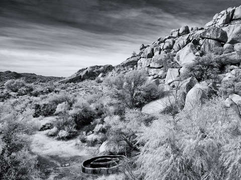 Black and white joshua tree national park