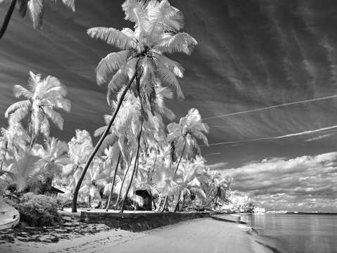 Beachscape in infrared