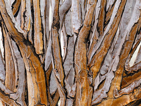 Quiver tree abstract