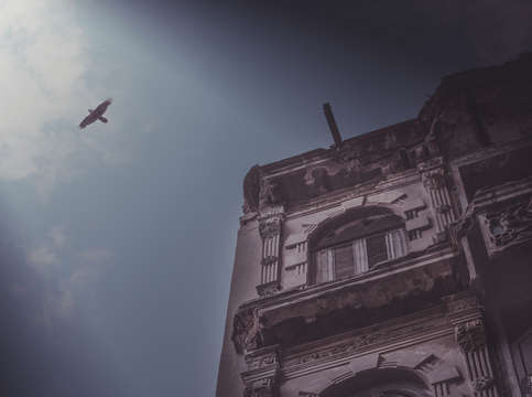 Bird flying over havana city
