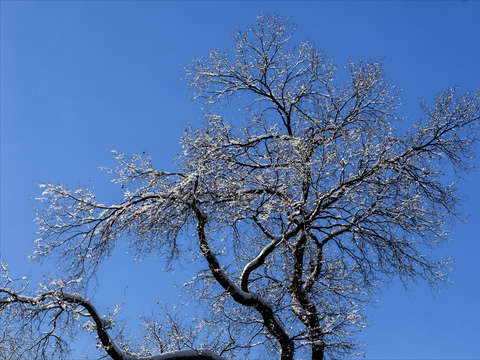 Branches and ice 2