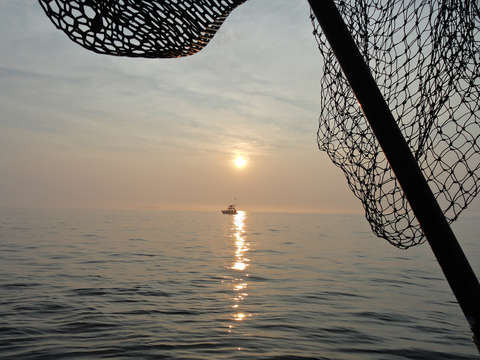 Block island sounds catch of the evening