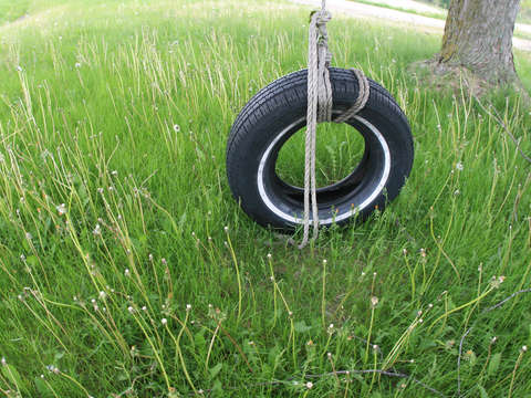 Wisconsin tire swing
