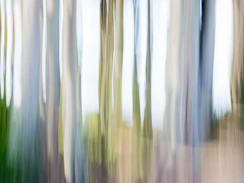 Moving trees iii 5