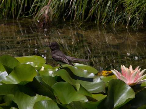 Bird on lilypad
