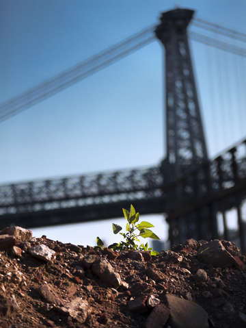 A tree grows in brooklyn 2
