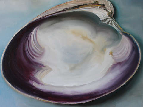 Clam shell 2