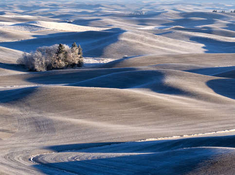Palouse blue